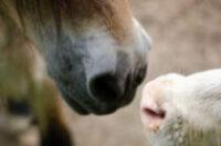 pferd-bulle-munde01-klein