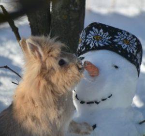 Pfiffi und der Schneemann