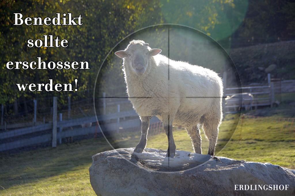 Benedikt2