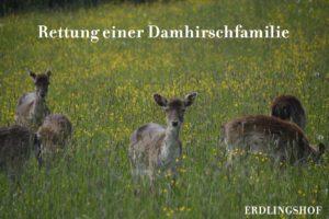 Damis_4