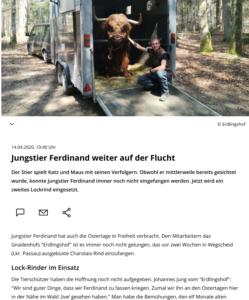 Bericht über Ferdinands fortgesetzte Flucht aus der Metzgerei