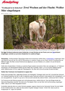 Meldung der Münchner Abendzeitung über Stier Ferdinands Rettung