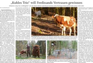 Bericht über die Suche mit den Lock-Rindern Bruno und Michel