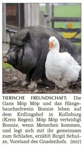 Bericht über die Freundschaft zwischen Schwein Bonnie und Gans Möp Möp